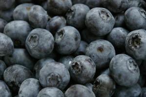 Summer Blueberries