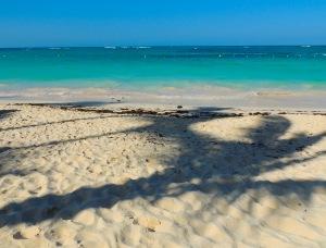 Punta Cana Palm