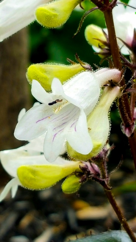 Fuzzy White Flower