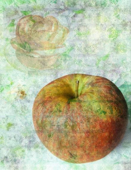 Apple Petals