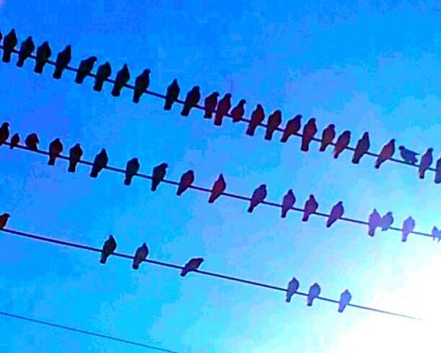 Winter Pigeons