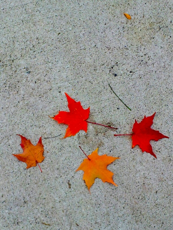 Four leaves on ground