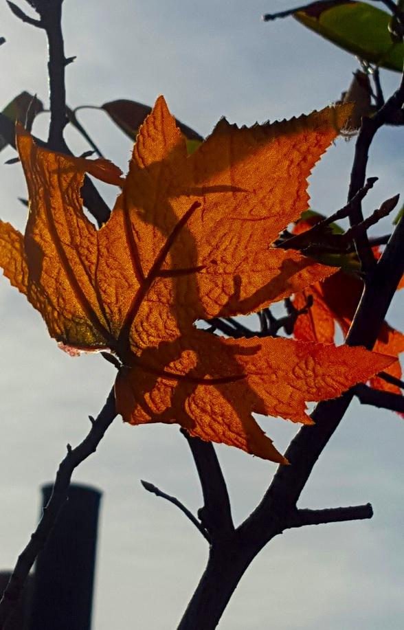 Yellow Backlit Leaf