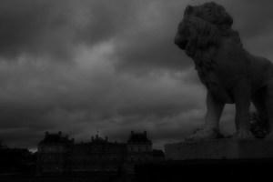 Lion B&W copy