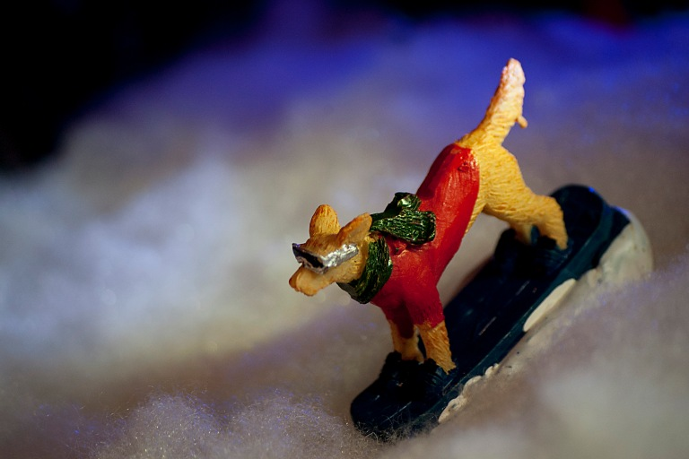 Snowboard Dog