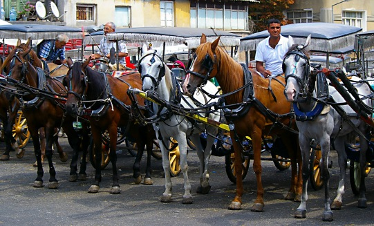 Horse Taxis - Buyukada Turkey