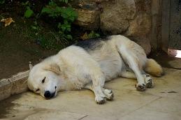 Sleeping Palace Dog - Istanbul