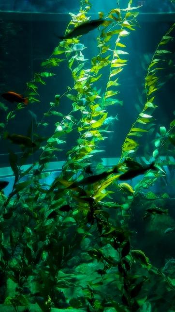 Underwater Fauna