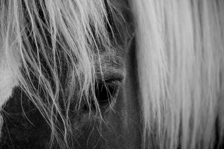 Eye Blonde Horse