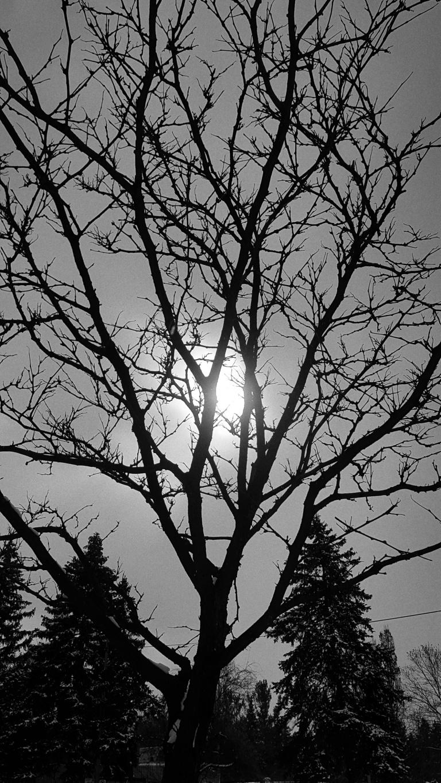 winter sun2