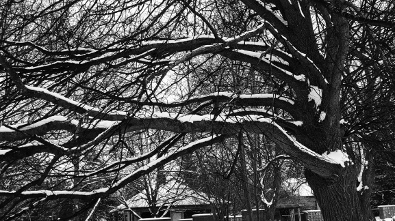 tree in winter