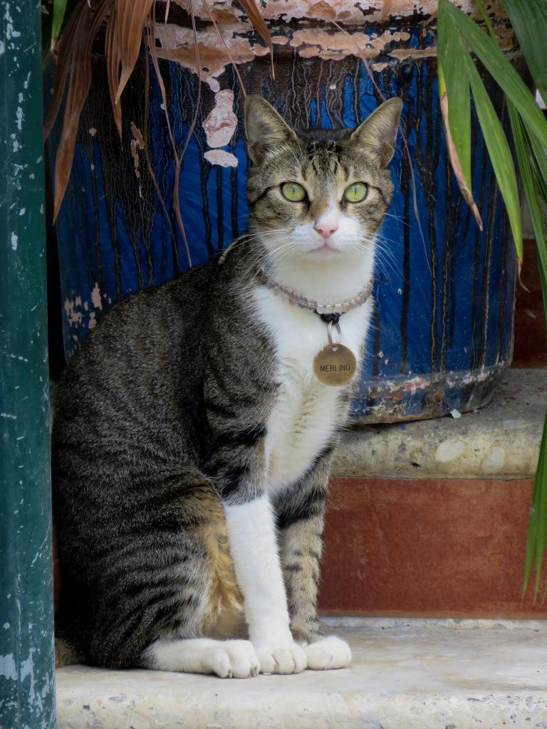 Merlino the Cat